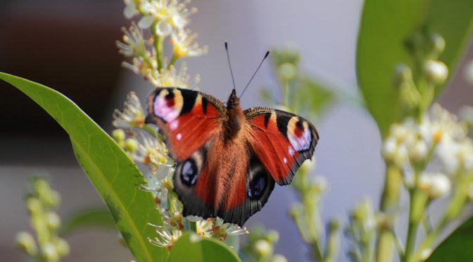 Fauna und Flora im eigenen Garten